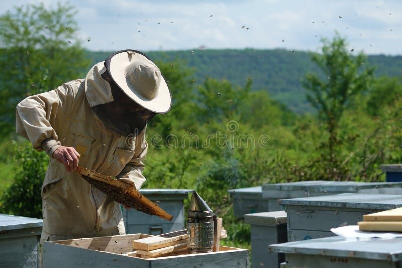 Homme tenant un nid d'abeilles compl?tement des abeilles Apiculteur dans les v?tements de travail protecteurs inspectant le cadre photographie stock