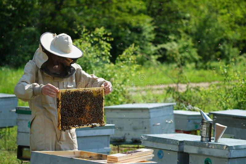 Homme tenant un nid d'abeilles compl?tement des abeilles Apiculteur dans les v?tements de travail protecteurs inspectant le cadre image libre de droits