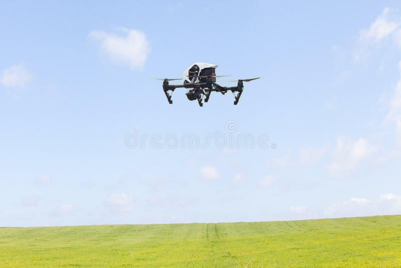 Hommel die over een graangewassengebied bij blauwe hemel vliegen stock afbeelding