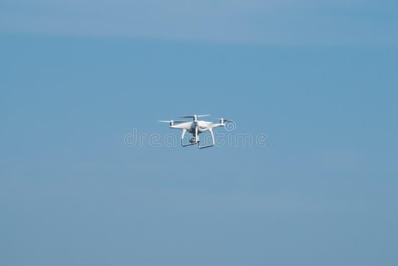 Hommel die tegen de blauwe hemel vliegen, stock foto