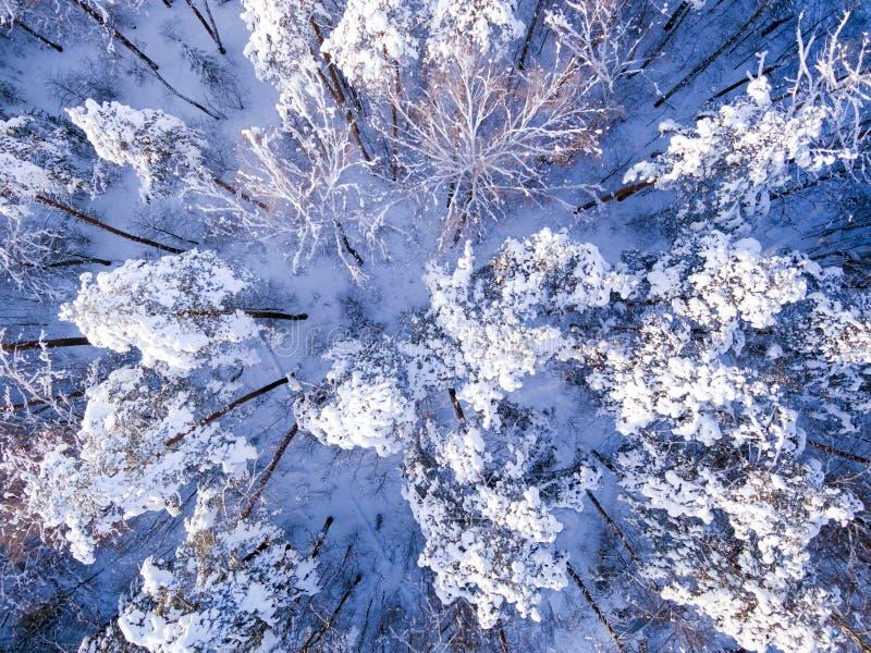 Hommelsatellietbeeld op de winterbos na sneeuwval De sneeuwlandschap van het vogelsoog royalty-vrije stock foto