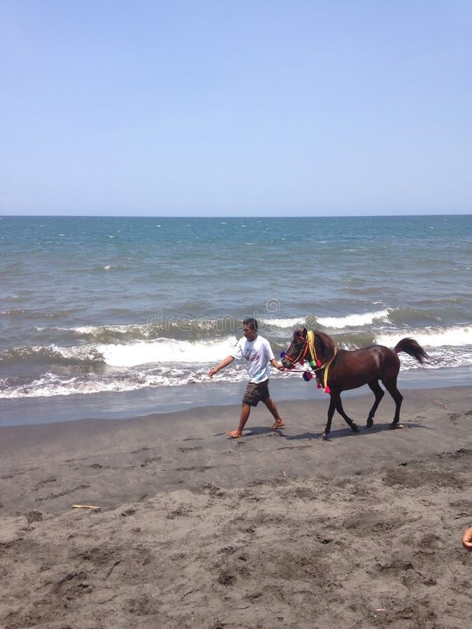 Hommes avec le cheval images libres de droits