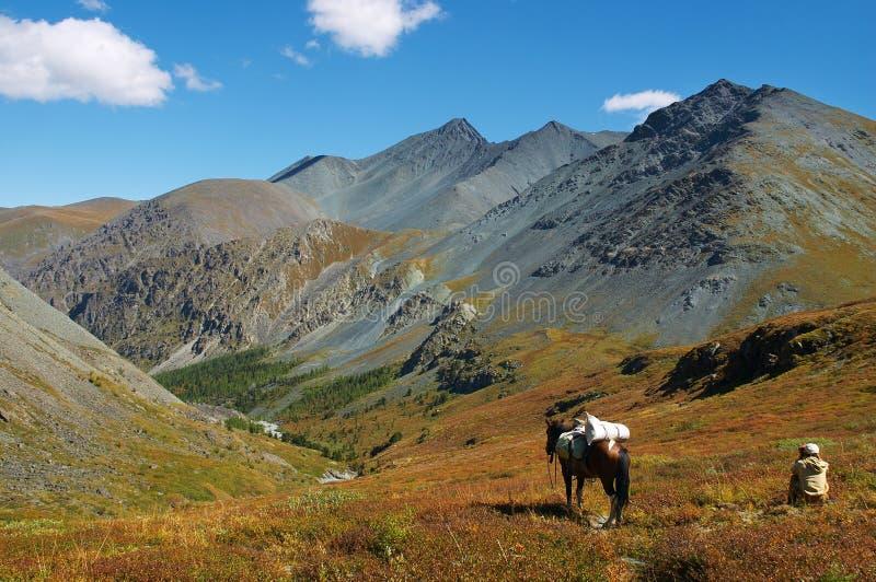 Hommes, cheval et montagnes images libres de droits