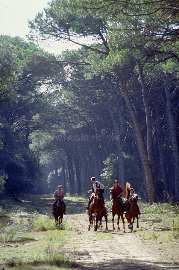 Hommes et chevaux photo libre de droits