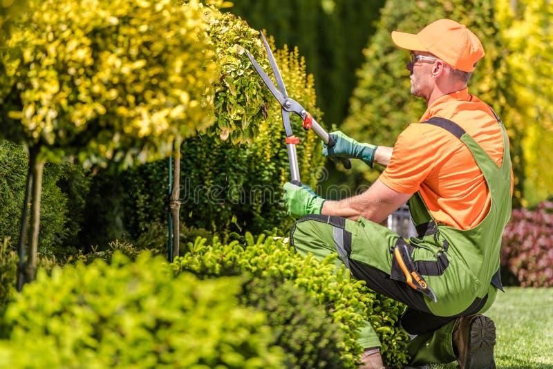 Hommes formant des arbres de jardin photos stock