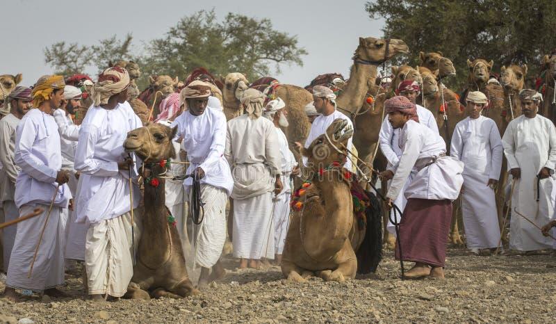 Hommes omanais étant prêts pour emballer leurs chameaux sur un pays poussiéreux photos stock