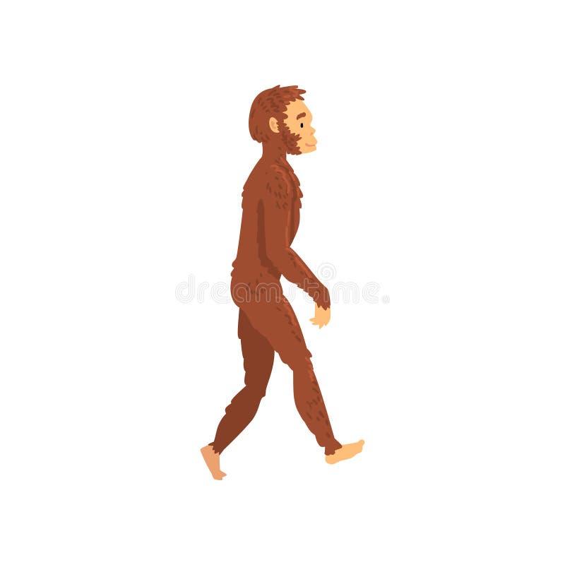 Homo erectus, etapa de la evolución humana de la biología, proceso evolutivo del ejemplo del vector de la mujer libre illustration