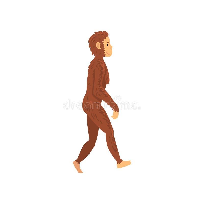 Homo erectus fêmea, fase da evolução humana da biologia, processo evolucionário de ilustração do vetor da mulher ilustração royalty free