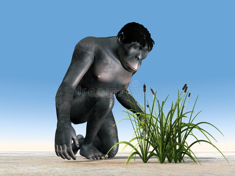 Homo Habilis - människaevolution stock illustrationer