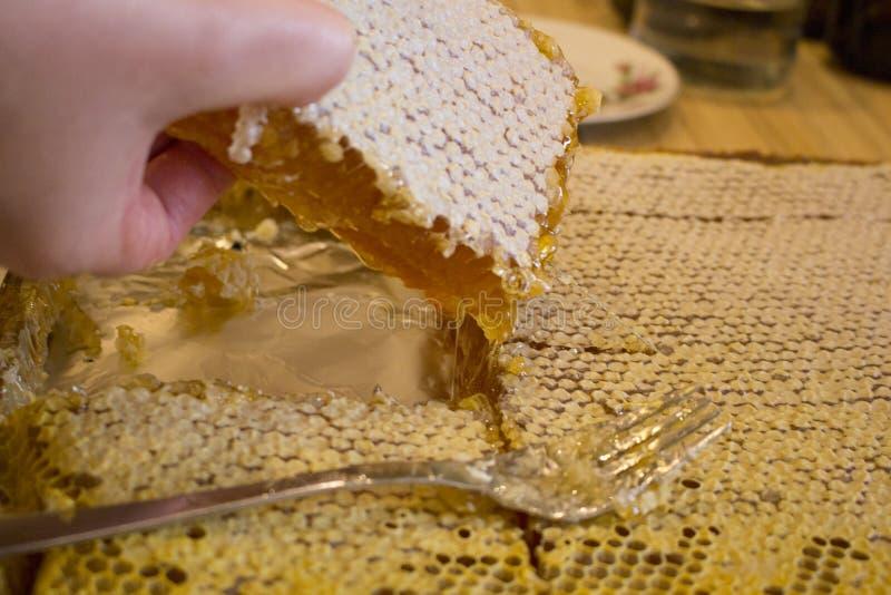 Hon tar honung arkivbild