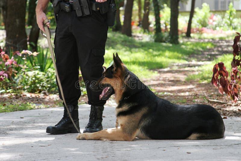 Hond 1 van de politie stock afbeelding