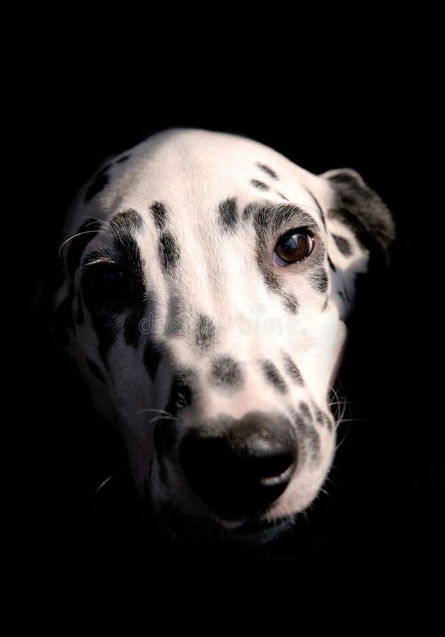 Hond 2 royalty-vrije stock fotografie