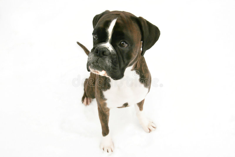 Hond vector illustratie