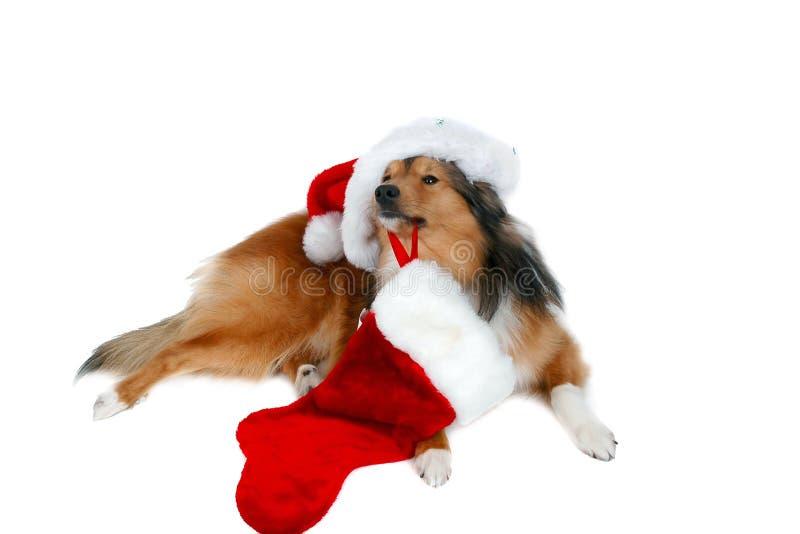 Hond 3 van Kerstmis stock afbeelding
