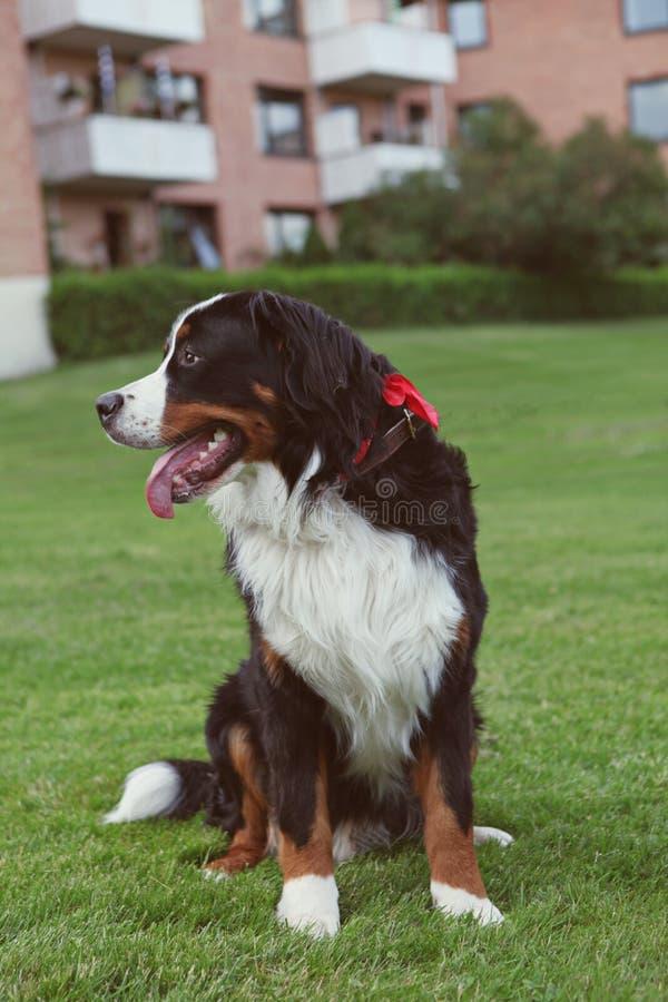 Hond royalty-vrije stock foto