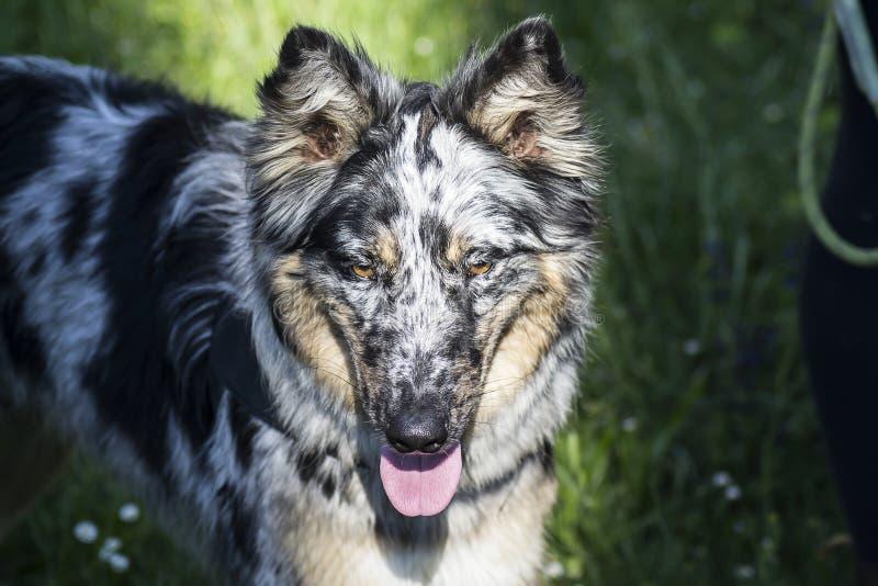 Hond in aard stock afbeelding