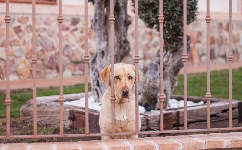 Hond achter een Omheining royalty-vrije stock foto's