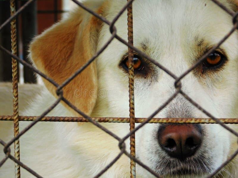 Hond achter een Omheining royalty-vrije stock afbeeldingen