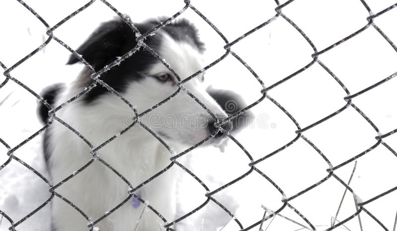 Hond achter een omheining, schuilplaats royalty-vrije stock foto