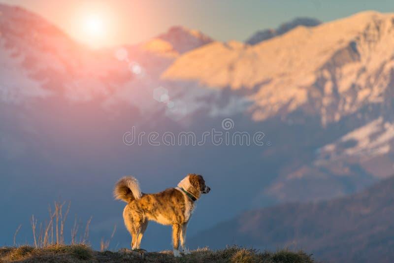 Hond in alleen berg stock foto