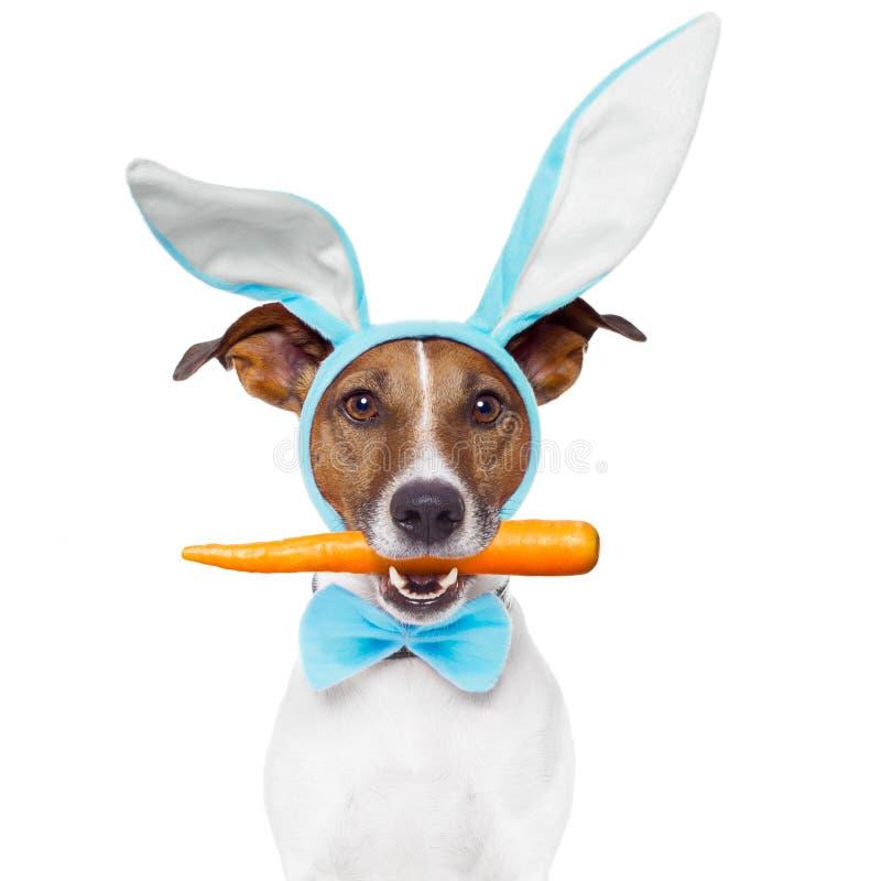 Hond als konijntje stock afbeelding