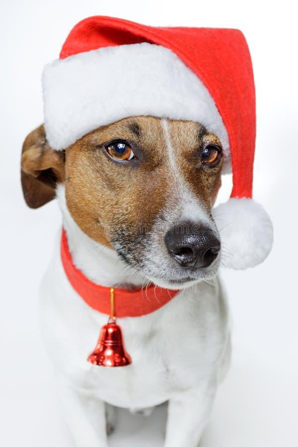 Hond als santa stock afbeeldingen
