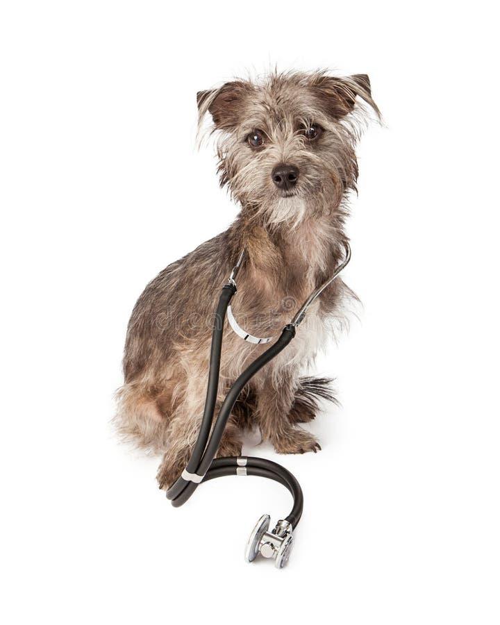Hond Arts With Stethoscope royalty-vrije stock fotografie