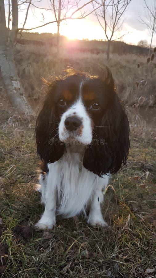 Hond bij aard royalty-vrije stock fotografie