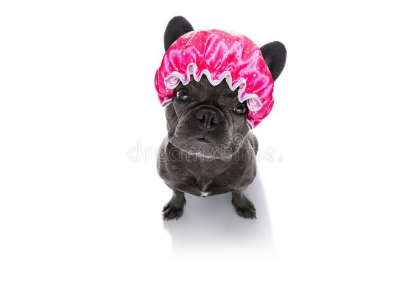 Hond bij de kappers royalty-vrije stock afbeeldingen
