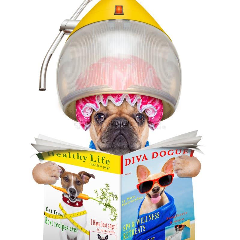 Hond bij de kappers royalty-vrije stock foto's