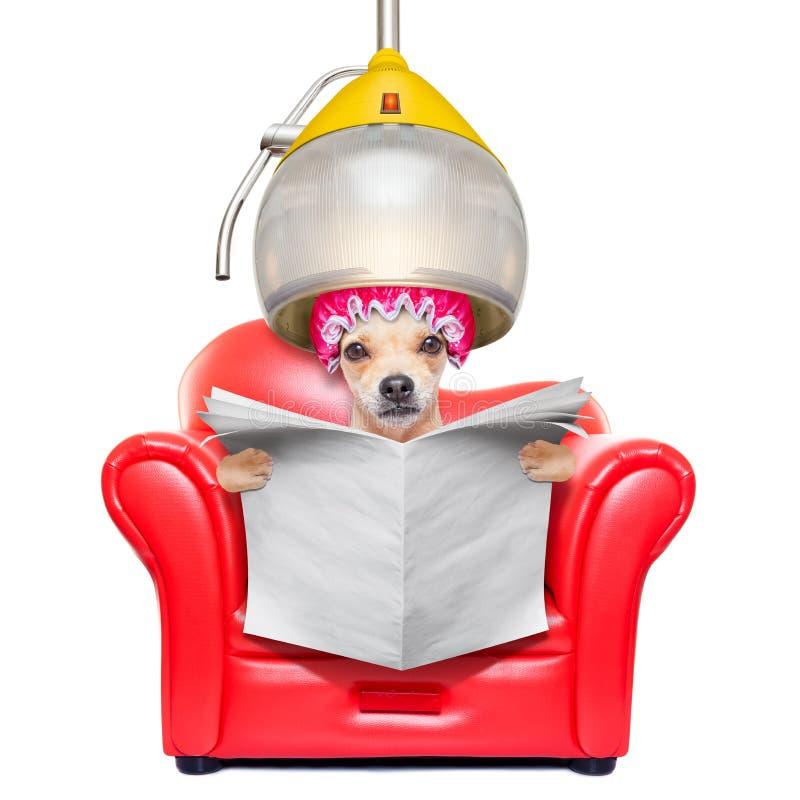Hond bij de kappers, het verzorgen stock foto