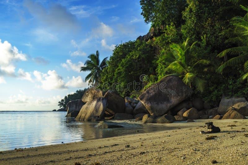 Hond bij een mooie paradijs beachwith palmen en granietrotsen  stock fotografie