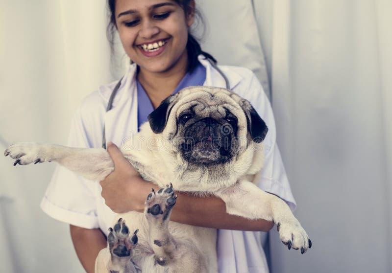Hond bij het huisdierenziekenhuis voor controle omhoog stock foto's