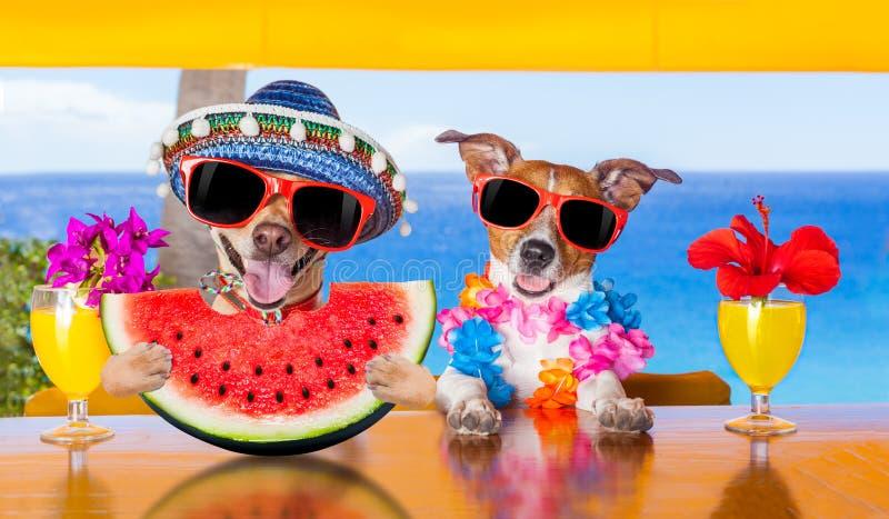 Hond bij het strand en de watermeloen stock foto's