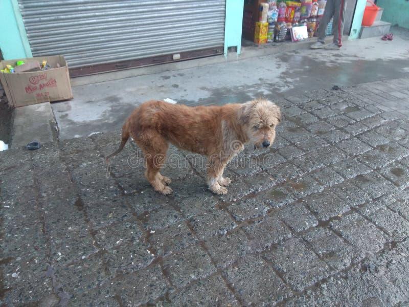 Hond bij heuvel stock foto