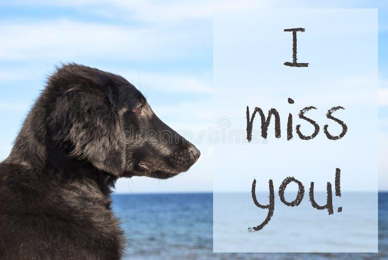 Hond bij Oceaan, Tekst I Misser You royalty-vrije stock foto
