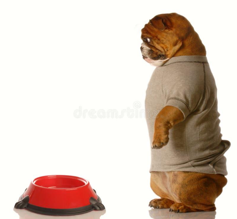 Hond bij voedselschotel stock fotografie