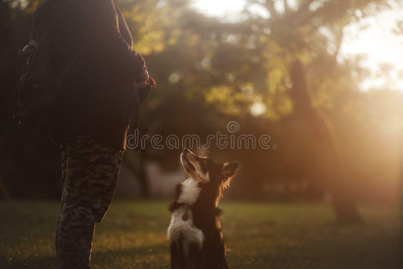 Hond bij zonsondergang Huisdier voor een gang in aard Border collie royalty-vrije stock afbeeldingen