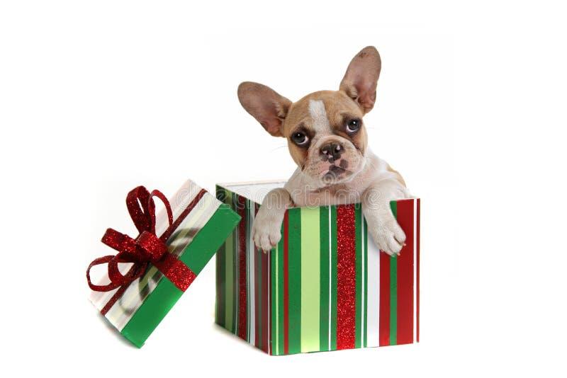 Hond binnen een Gift van Kerstmis stock fotografie