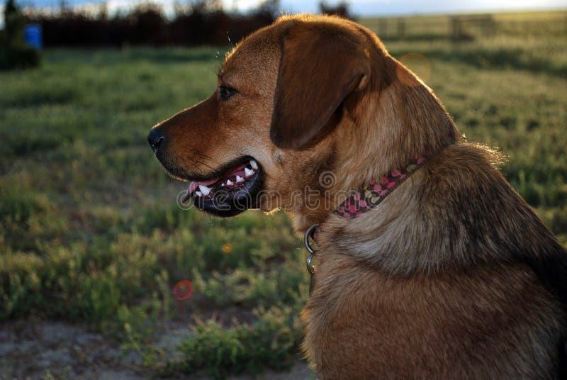 Hond buiten stock afbeelding