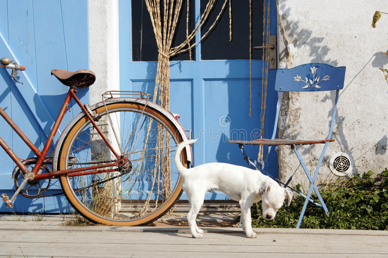 Hond buiten blauwe deur.   stock fotografie