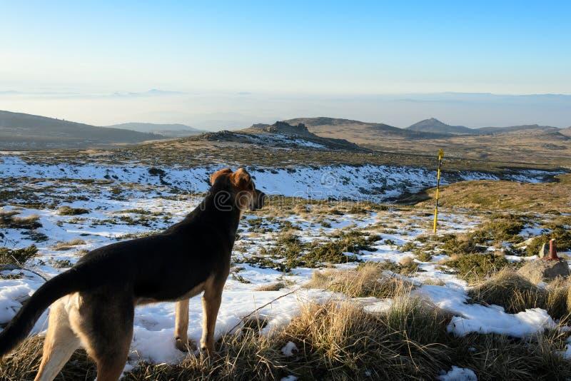 Hond in de berg royalty-vrije stock foto's