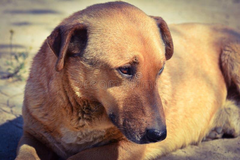 Hond de beste vriend stock afbeeldingen
