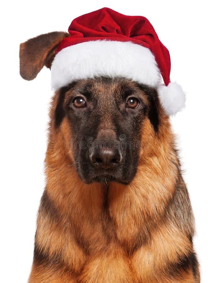Hond in de Hoed van de Kerstman royalty-vrije stock foto