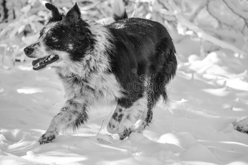 Hond in de sneeuw stock afbeelding