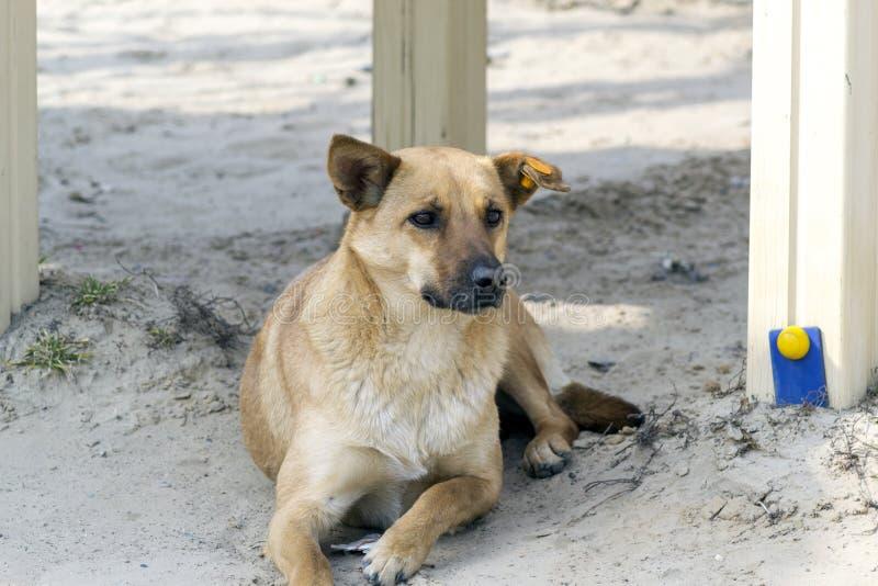 hond in de speelplaats stock foto's