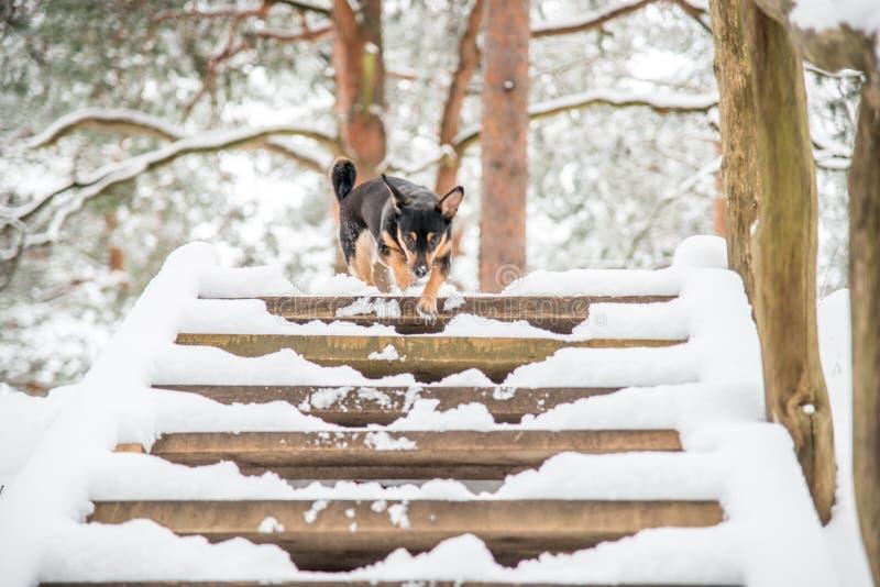 Hond in de winter royalty-vrije stock afbeeldingen