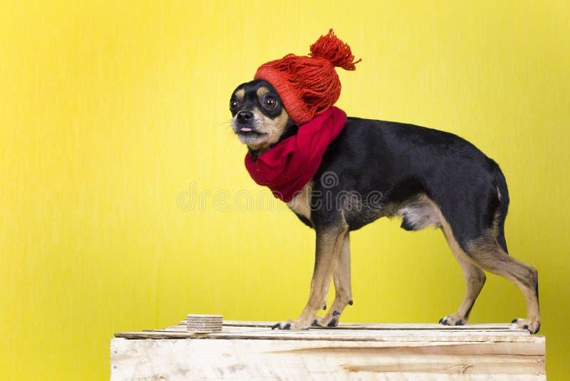 Hond in de winterkleren royalty-vrije stock afbeeldingen
