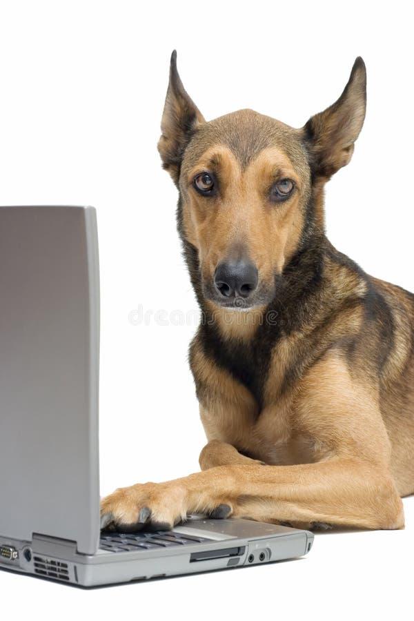 Hond die aan laptop werkt royalty-vrije stock afbeelding