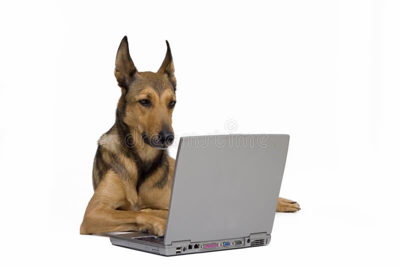 Hond die aan laptop werkt stock foto's